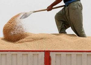 افزایش 33 درصدی قیمت گندم با افزایش قیمت سوخت