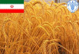 عبور تولید غلات ایران از مرز 20 میلیون تن و تداوم واردات گندم
