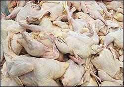 شیوع آنفولانزای مرغی در برخی واحدهای تولیدی