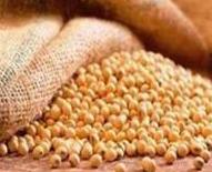تداوم نوسان در بازار مواد غذایی