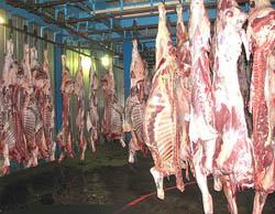 70 درصد واردات گوشت در دستان مافیاست