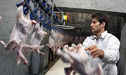 گوشت ارزان شد/ قیمت مرغ هم کاهش مییابد