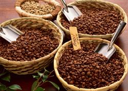 افت قیمت دانه کاکائو در بازار جهانی و بورس نیویورک