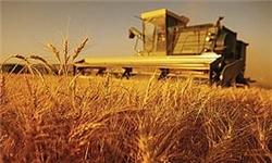 توقف نسبی فروش گندم به دولت/فروش 440 تومانی گندم در بازار