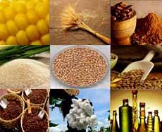 نوسانات قیمت مواد غذایی در بازار جهانی
