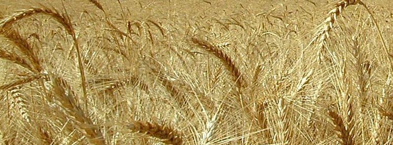 عرضه محصولات کشاورزی در بورس کالا دلالی را حذف میکند