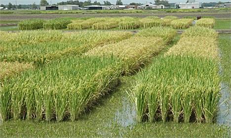 برنامه دولت برای 24 محصول کشاورزی
