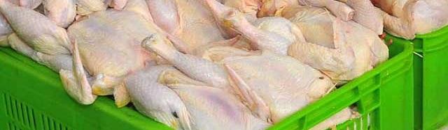 ۱۵۰ هزار تن مرغ در انبارهای وزات جهادکشاورزی
