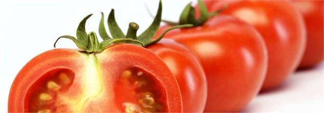 فراز و فرود گوجهفرنگی از 10 هزار تا 100 تومان/ ورود گوجه ارزان پاکستانی به بازار