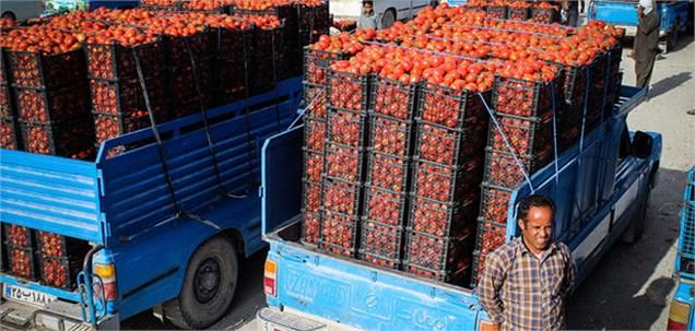 خرید تضمینی 3 هزار تن گوجه فرنگی/ قیمت گوجه فرنگی تقویت شد