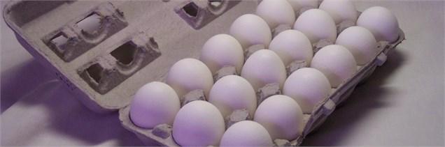 صادرات ۷۰ هزار تن تخم مرغ در سال ۹۳