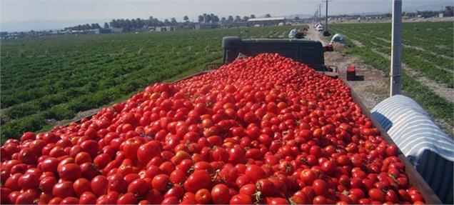 ۵۰۰ کامیون گوجه در معرض فاسد شدن