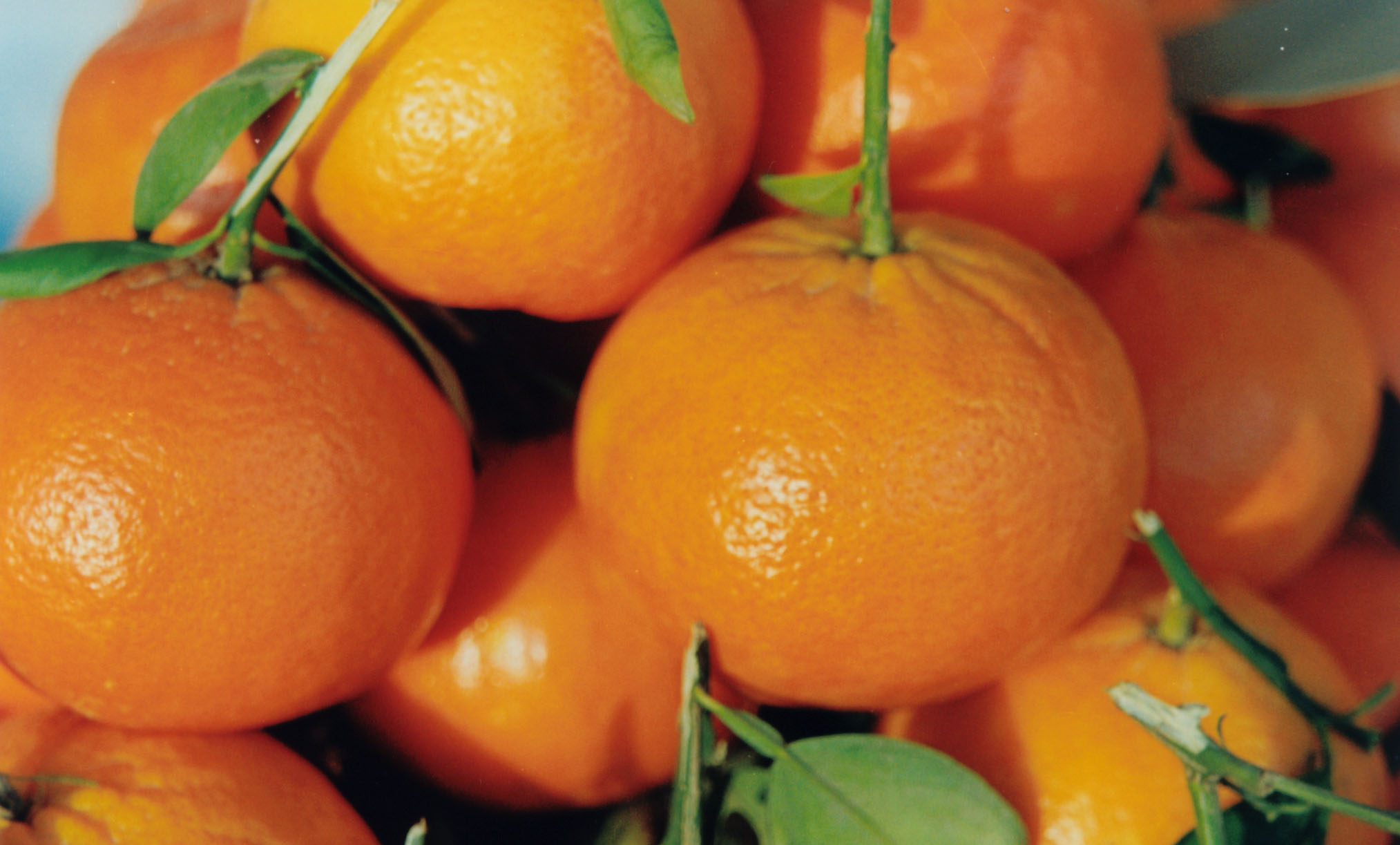 صادرات نارنگی پاکستان به 350000 تن خواهد رسید