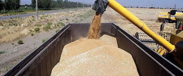 قیمت تضمینی محصولات کشاورزی ابلاغ شد+جدول