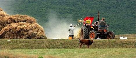 ۶۹۰ هزار تن محصولات زراعی توسط کشاورزان ورامینی تولید شد