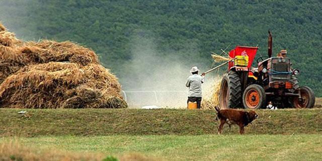 محصولات کشاورزی قبل از عرضه به بازار کنترل میشود؟