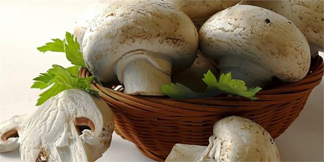 هفتاد هزار تن سرانه مصرف قارچ در کشور