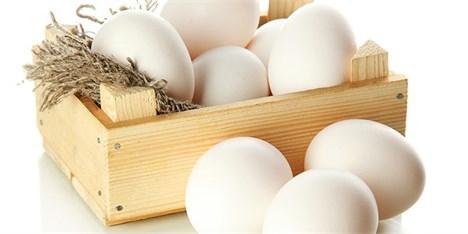 اعلام گرانی تخممرغ از سوی بانکمرکزی، کارشناسی نیست