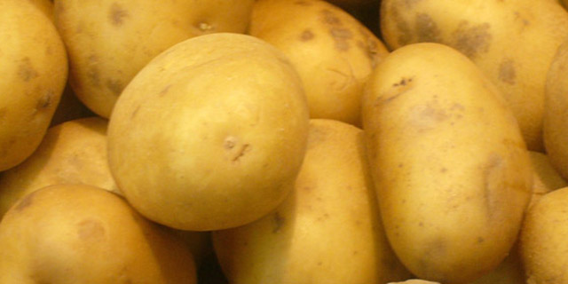 مشوق صادرات سیب زمینی در اردبیل پرداخت شد