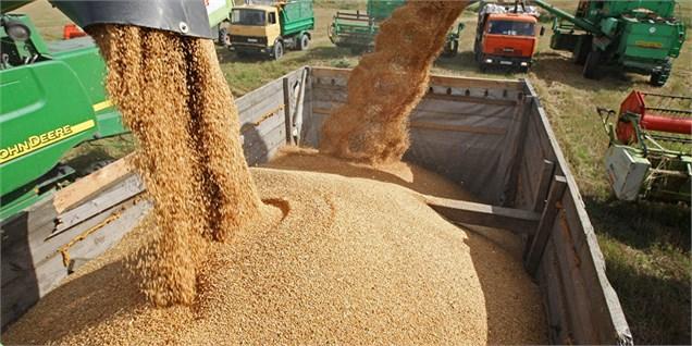 عرضه ۲۵۰۰ تن گندم و شکر در بورس کالا