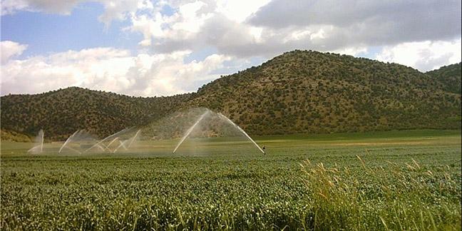اعلام آمادگی هلند برای انتقال تکنولوژی نوین کشاورزی به ایران