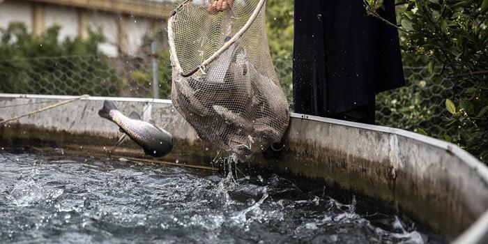 دعوت ترکان برای سرمایهگذاری در پرورش ماهی در قفس