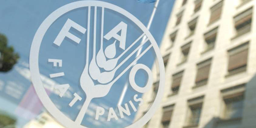 آغاز نشست کمیسیون استانداردهای غذایی کدکس با حضور ایران در فائو
