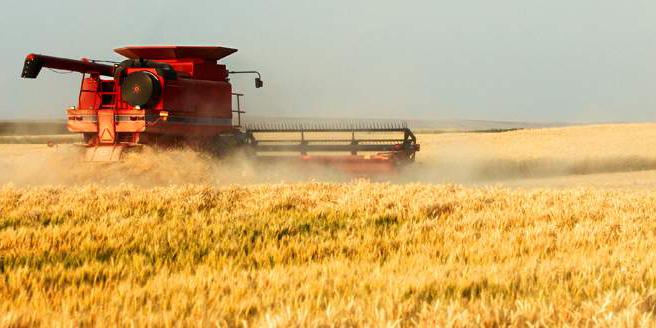 مدیریت صحیح مبارزه، آفت سن گندم در مزارع را کاهش داد
