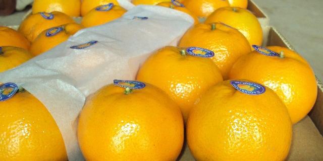 صادرات نارنگی پاکستان افزایش مییابد