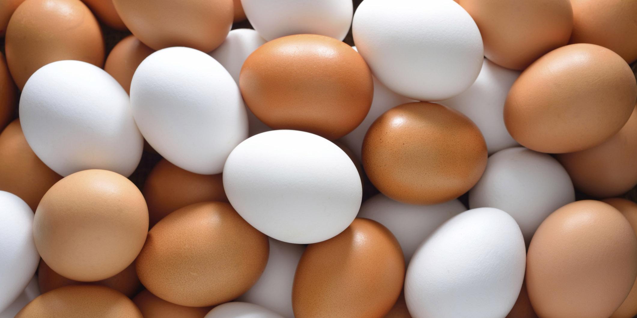 صادرات تخم مرغ آب رفت