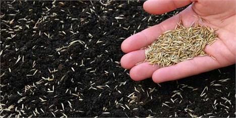 کشور از واردات بذر هیبریدی بینیاز میشود