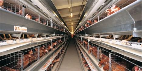 مشکلی برای تامین گوشت مرغ نداریم