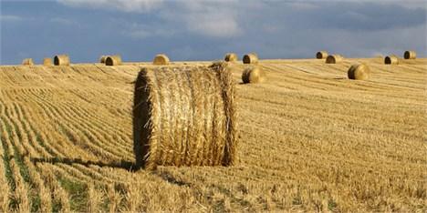 چرا بهای گندم کشاورزان به موقع پرداخت نمیشود