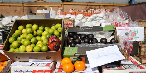 ۲۰ آفت خطرناک با میوه قاچاق وارد کشور شد