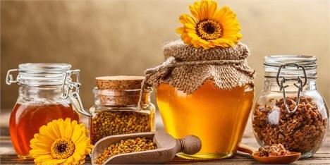 وزیر کار: نخستین سرمایهگذار خارجی در تولید عسل به ایران آمد