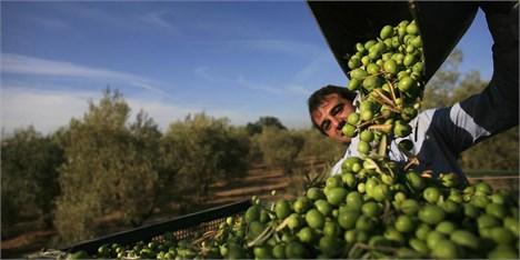 غوغای قاچاق در بازارچههای مرزی/عرضه گسترده روغن زیتونهای ممنوعه