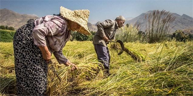 وعده اجرای قوانین بلاتکلیف کشاورزی به کجا رسید