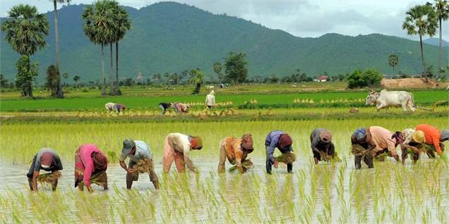 رشد کشاورزی در سال قبل ۵.۴ درصد شد