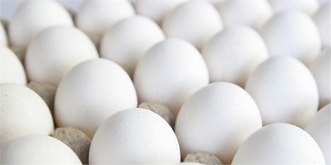 حک شدن قیمت بر روی تخم مرغ شاید وقتی دیگر