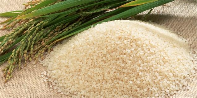 واردات برنج از مناطق آزاد/ صدور مجوز قرنطینهای واردات برنج توسط وزارت جهاد در فصل ممنوعیت واردات