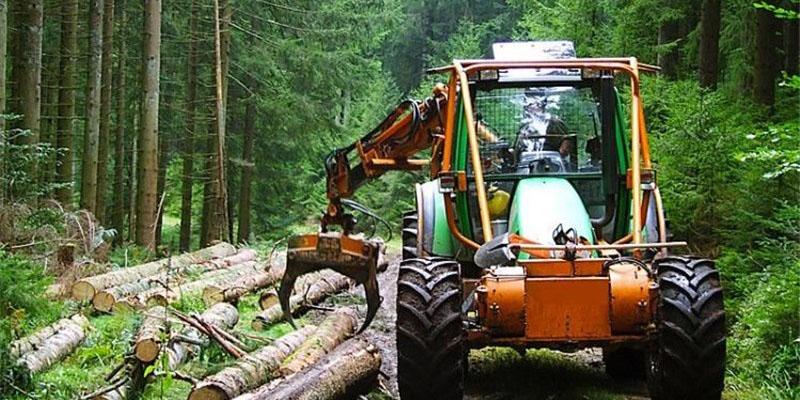 ممنوعیت برداشت از جنگلهای شمال تا ۵ سال/ واردات چوب بیشتر نمیشود