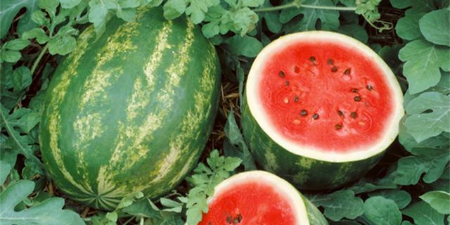 هندوانه برای شب یلدا سه برابر سال گذشته تولید شد
