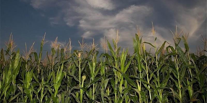 منابع آبی و معیشت کشاورزان با بحران مواجه است/ خودکفایی نباید به قیمت نابودی کشور باشد