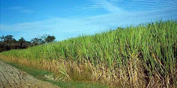 اعطای مجوز برای واردات شکر آغاز شد/ برای 5 ماه آینده در انبارها شکر داریم