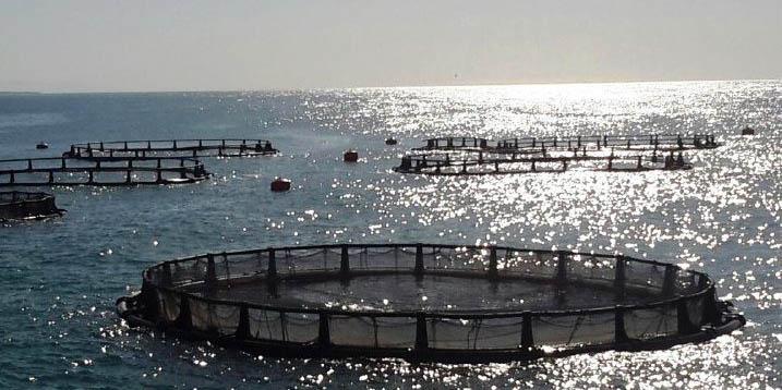 پرورش ماهی در قفس فرصت پیش روی شیلات/ تولید ماهی در قفس شعاری بیش نیست