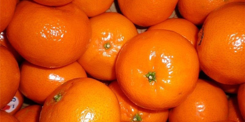 آغاز خرید تضمینی پرتقال از سورتینگ داران مازندران