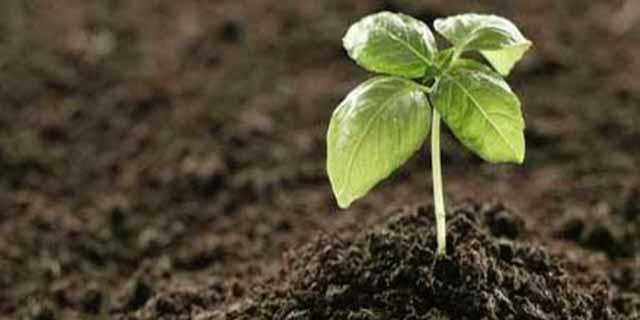 اجرای طرح بهبود وضعیت خاک کشاورزی در برنامه ششم