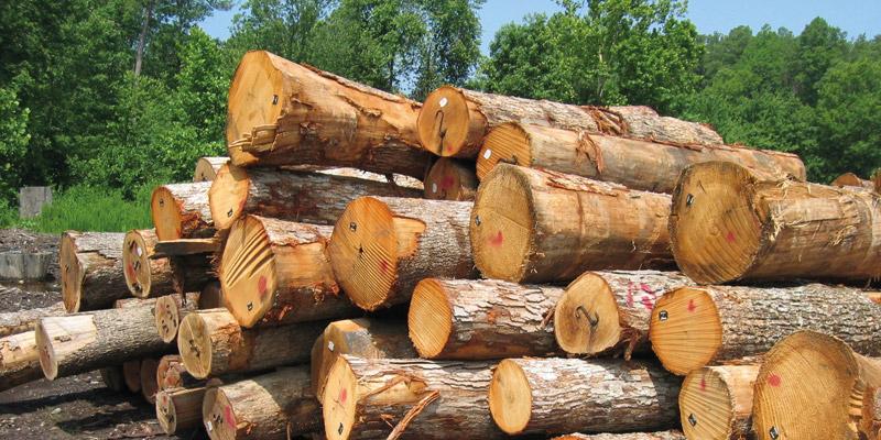 افزایش تعرفه واردات چوب توسط آمریکا را بیپاسخ نمیگذاریم
