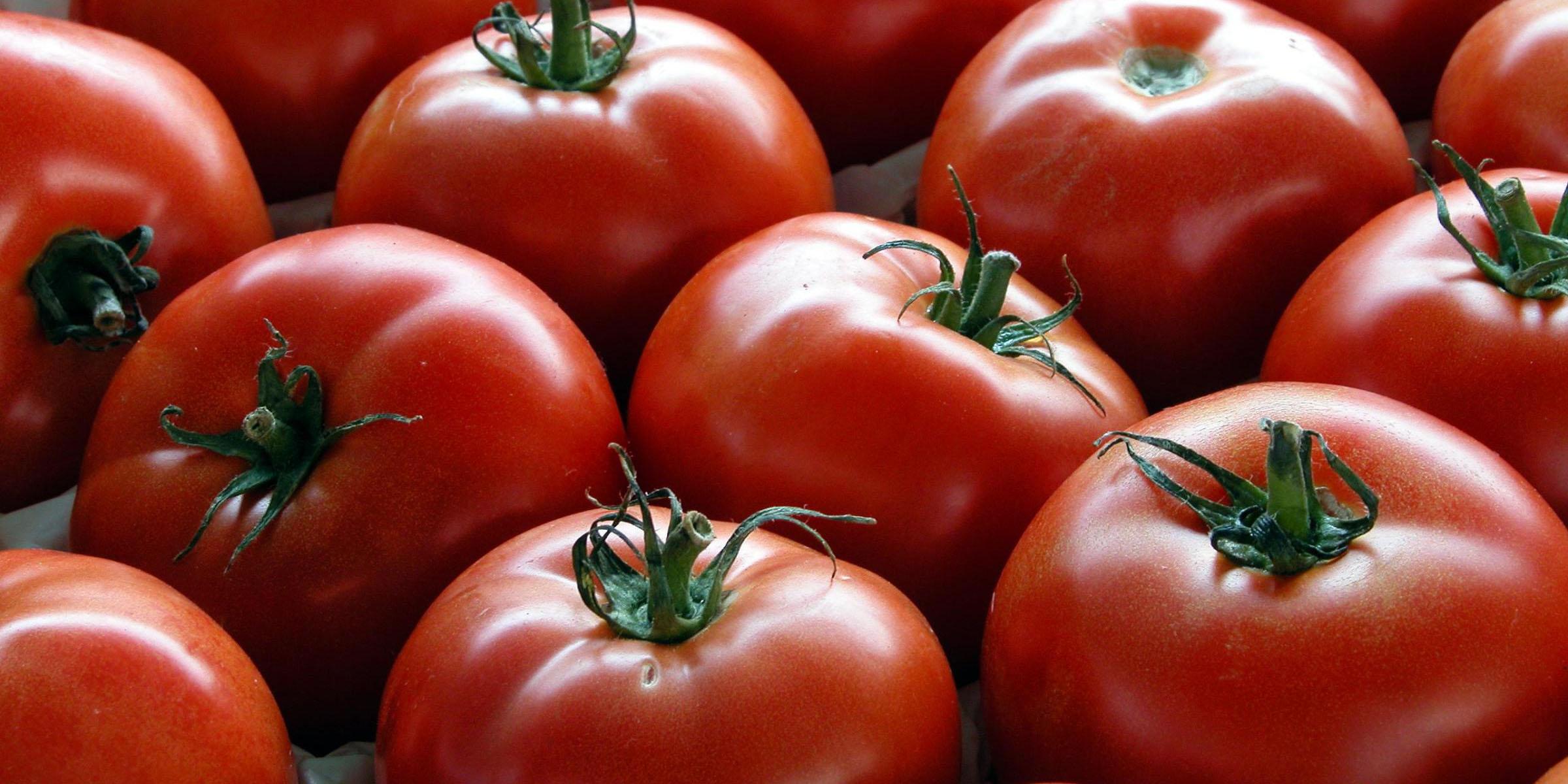 قیمت گوجه فرنگی نصف شد
