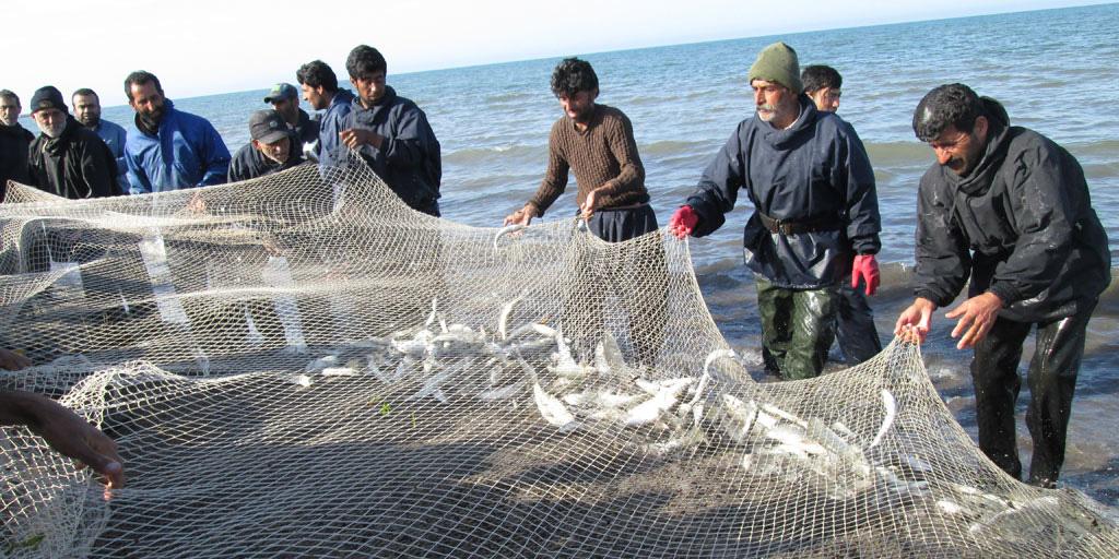 تلاش برای حذف ماهی تیلاپیا از تالاب شادگان